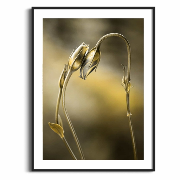 Tulips With Golden Shine Print in black frame with border