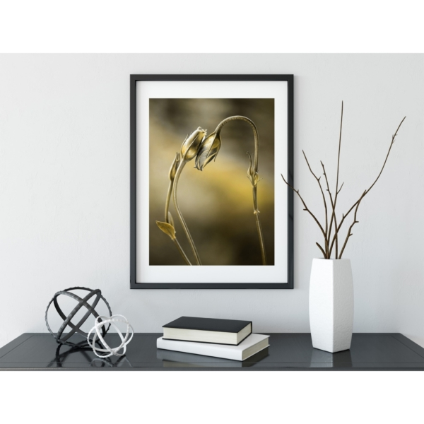 Tulips With Golden Shine Print with border in black frame on the shelf