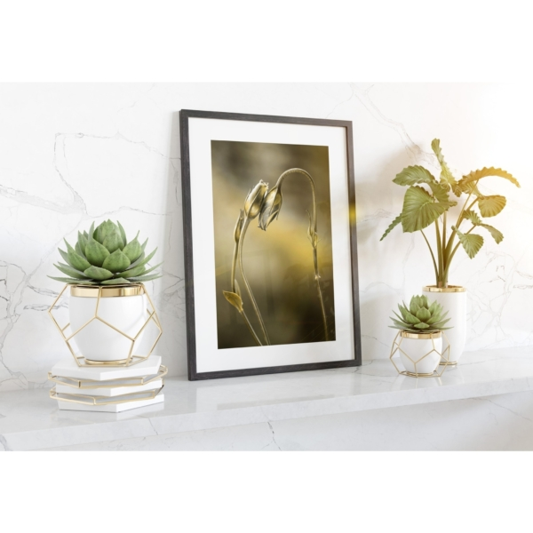Tulips With Golden Shine Print in black frame on the shelf and sunlight