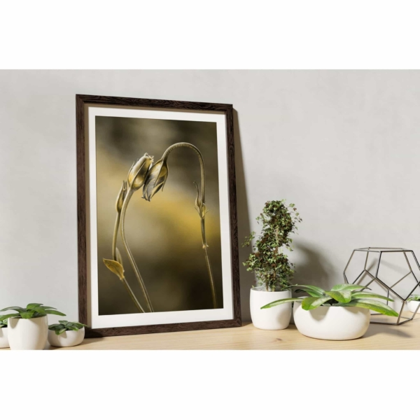 Tulips With Golden Shine Print in wooden frame on the shelf