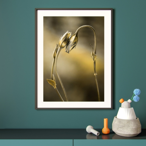 Tulips With Golden Shine Print in black frame on the wall