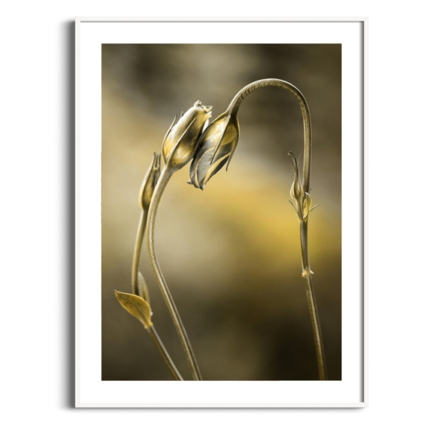 Tulips With Golden Shine Print in white frame with border