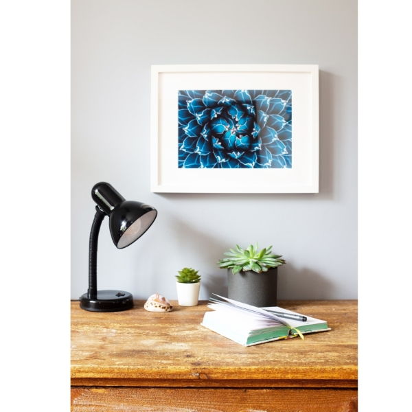 Agave Cacti in Blue white frame on the wall horizontal