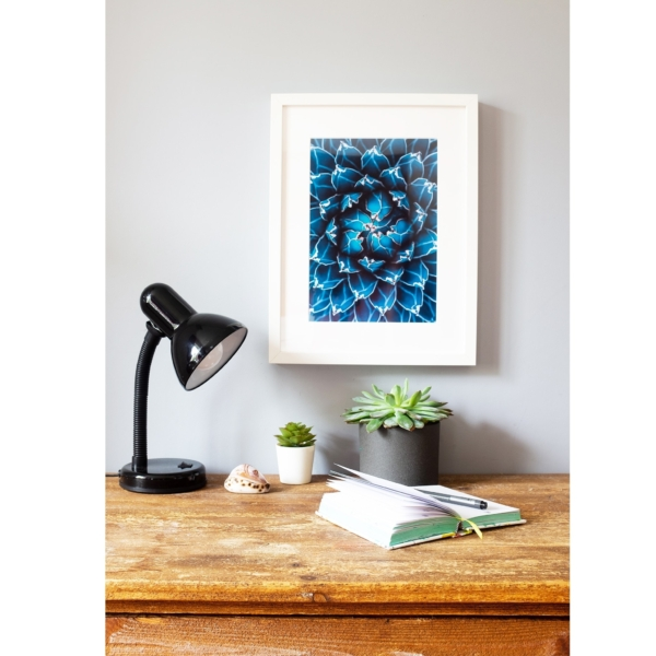 Agave Cacti in Blue white frame on the wall vertical